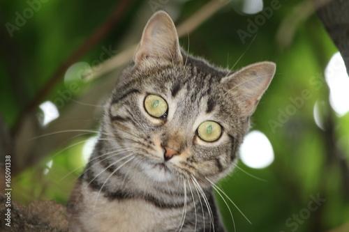 Photo portrait d'un chaton dans le feuillage avec un grand regard