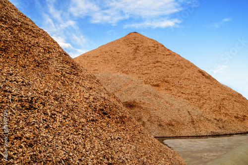 Fototapeta A load of wood chips for loading onto trucks for exporting