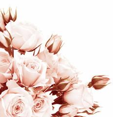 Fototapeta Optyczne powiększenie Fresh roses border