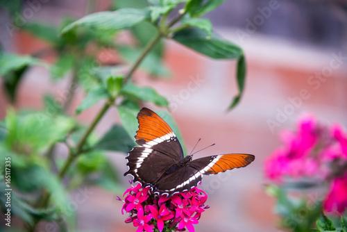 Plakat Motyl na kwiacie