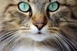 Das Gesicht einer hübschen jungen Norwegischen Waldkatze