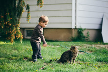 A Toddler Trying To Grab A Cat's Tail And Getting Hissed At.