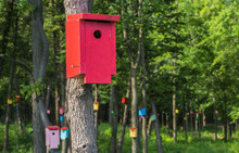 Birdhouse Forrest  With Many B...