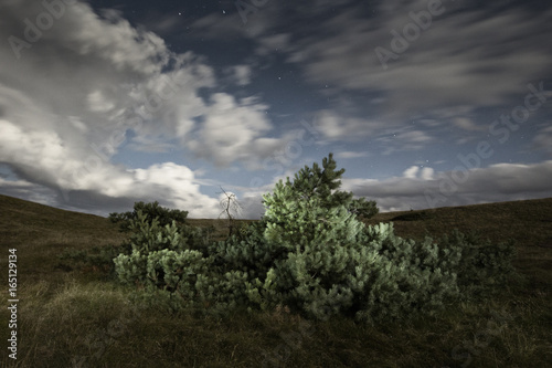 Foto op Plexiglas Noord Europa Trees in the hills