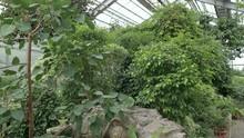 Winter Botanical Garden With T...