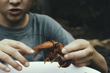 Young Boy Playing With Crawdad