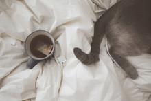 Closeup Of Cup Of Tea And Cat ...