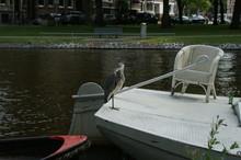 Grey Heron Resting On A Boat O...