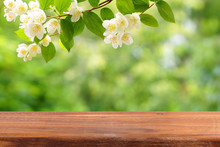 An Empty Wooden Table And A Branch Of Blossoming Jasmine Above It.