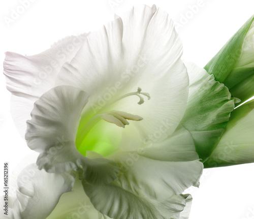 Fototapety, obrazy: Glowing gladiola