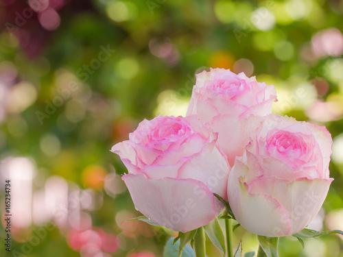 Fotobehang Zwavel geel Close up of pink roses and water drops.