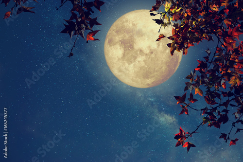 Valokuvatapetti Beautiful autumn fantasy - maple tree in fall season and full moon with milky way star in night skies background
