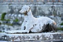 Stone Greyhound