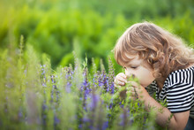 Adorable Toddler Girl Smelling Purple Flowers.