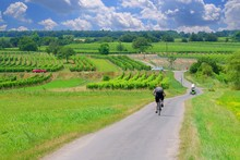 Bicycle Path Surrounded By Vin...