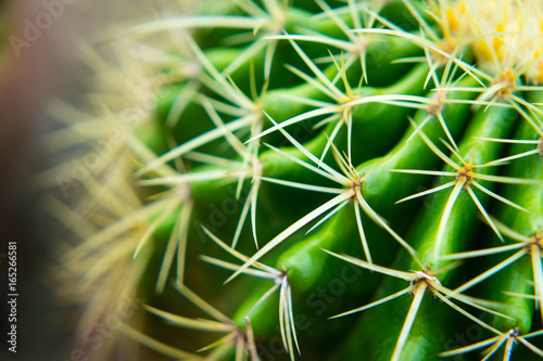 Papiers peints Cactus Green cactus and thorns are bright green as a barrier in our lives.