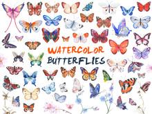 Watercolor Butterflies Illustr...