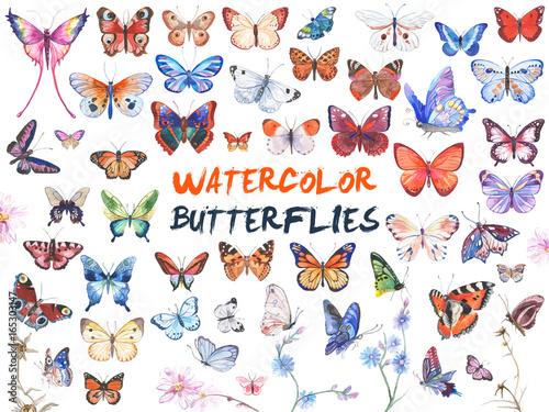 Fotografie, Obraz  Watercolor butterflies illustration
