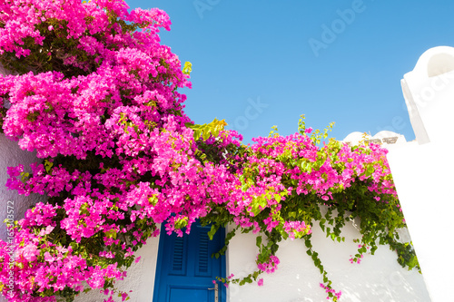 White-blue architecture and pink flowers