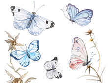 Watercolor Butterflies Illustr...