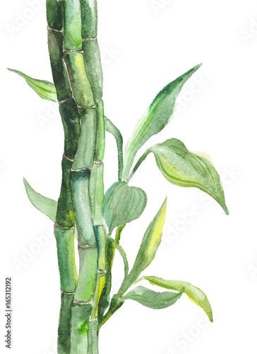 piekny-bambus