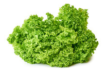 Fresh Green And Raw Lettuce Is...