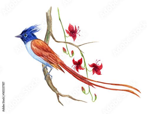 Naklejka premium Rajski ptak na gałąź egzotyczna roślina z kwiatami, akwarela rysunek na białym tle.