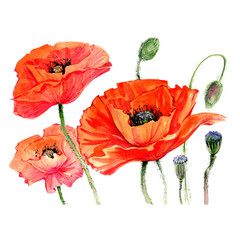 Panel Szklany Podświetlane Maki Wildflower poppies flower in a watercolor style isolated. Full name of the plant: poppies. Aquarelle wild flower for background, texture, wrapper pattern, frame or border.