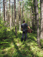 Man In The Forest Is Hunting For A Mushrooms Holding Creel - Mushroom Picking