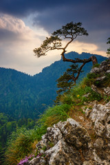 Obraz na SzkleSokolica peak in Pieniny Mountains with a famous pine at the top, Poland