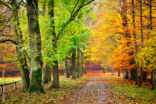 Cadres-photo bureau Route dans la forêt Pathway in the autumn forest