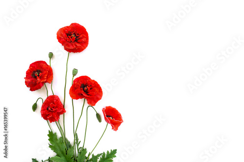 In de dag Poppy Flowers red poppies (Papaver rhoeas), (common names: corn poppy, corn rose, field poppy, Flanders poppy, red weed, coquelicot, headwark) on a white background with space for text. Top view, flat lay