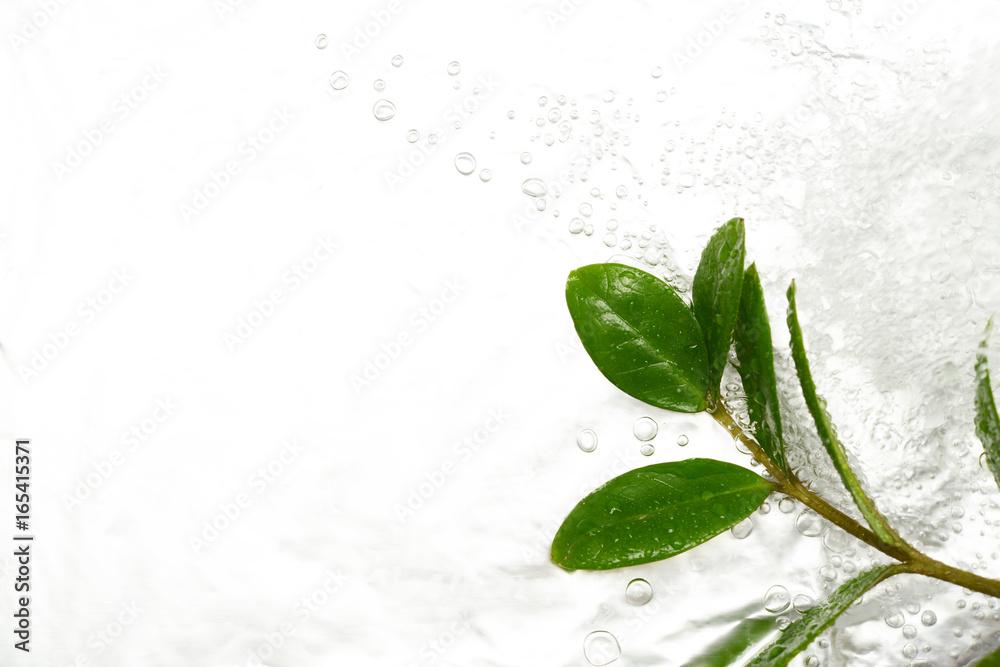 Fototapety, obrazy: 水と植物の葉