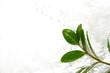 Leinwandbild Motiv 水と植物の葉