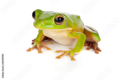 Spoed Foto op Canvas Kikker Watching tree frog