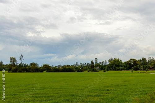 Foto op Plexiglas Weide, Moeras Rice field in the Vietnam