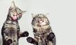 Lustige, niedliche Katzen