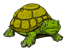 Cartoon Image Of Turtle. An Ar...