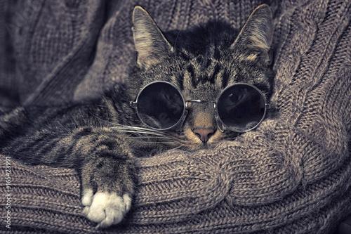Photo  Katze mit Sonnenbrille