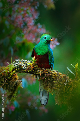 Photo  Magnificent sacred green and red bird