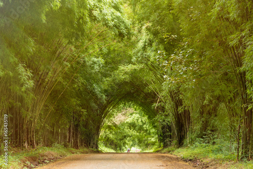 Foto op Canvas Bamboo Tunnel bamboo trees and walkway.