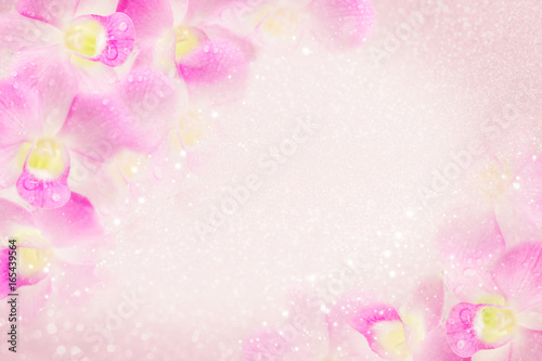 sweet-pink-orchid-flower-frame