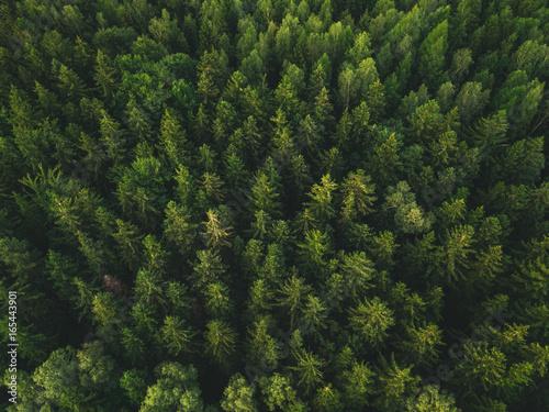 Las z powietrza
