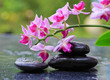 Pink orchids and black stones .Wellness background.