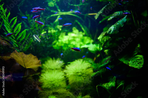 Fototapeten Wald Wonderful and beautiful underwater world with corals and tropical fish.