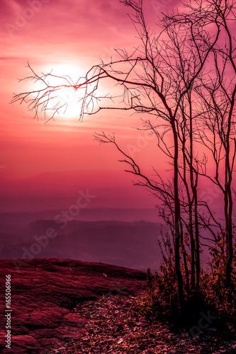 Foto op Plexiglas Crimson Night landscape of sky with bright super moon behind silhouette of dead tree.