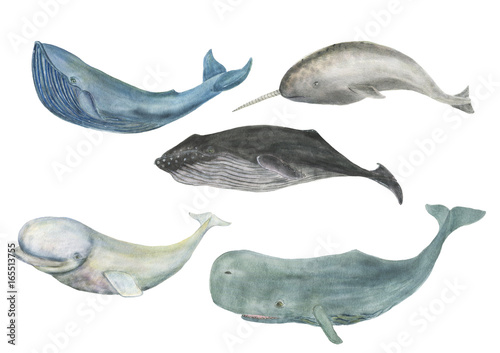 Fotografie, Tablou  Watercolor painting whale family