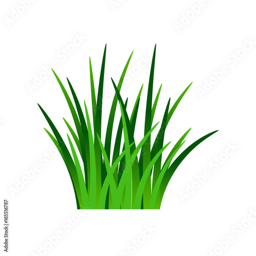 Fotografie, Obraz  Dark green grass isolated on white