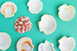 seashells on a bright background