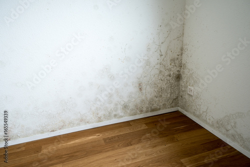 Fototapeta empty room in a new apartment with wooden floors and white walls and a serious m